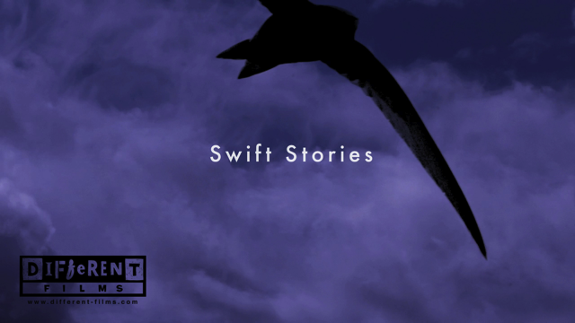 swifts holding 2